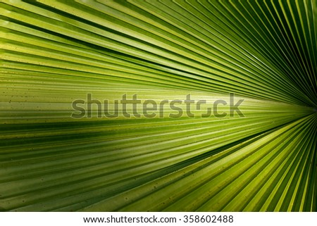 Palm Leaf Texture Background - stock photo