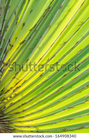 Palm leaf under soft sunshine