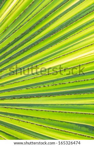 Palm leaf under sunshine