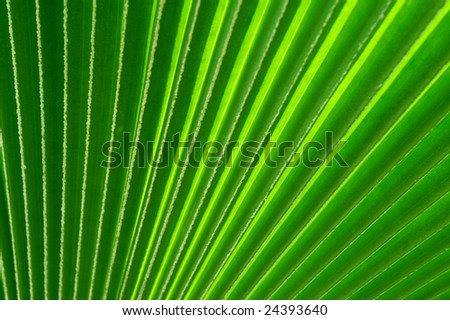 Palm leaf with diagonal lines (horizontal orientation). Soft focus.