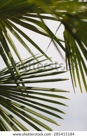 Palm leafs, selective focus - stock photo