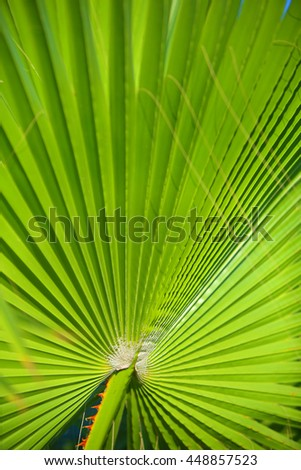 Palm leafs with radial pattern