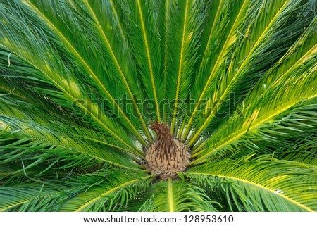 Palm leaves. - stock photo