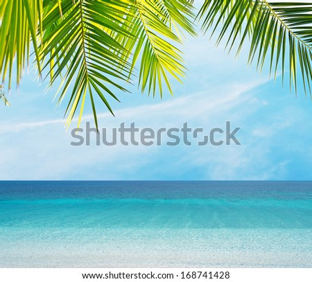 palm leaves by the shore - stock photo