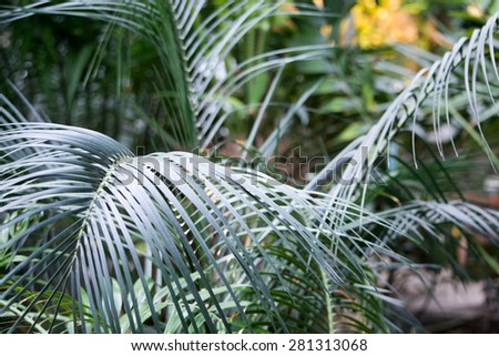 Palm leaves closeup for decorative background or mood.