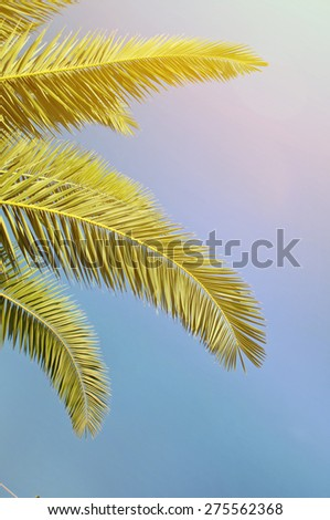 Palm leaves in front of blue sky  - stock photo
