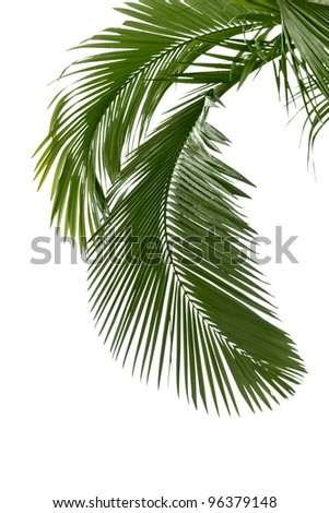 Palm leaves in the rain isolated on the white background - stock photo