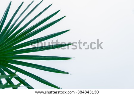 Palm leaves isolated on white background ,copy space for text - stock photo
