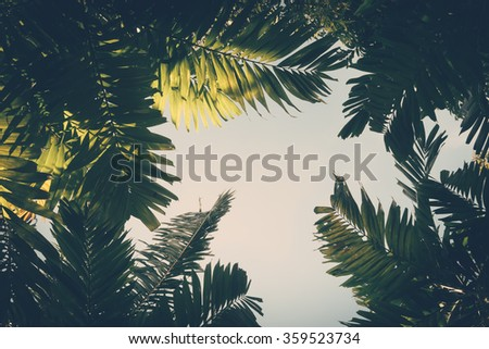 Palm leaves on sky background vintage color - stock photo
