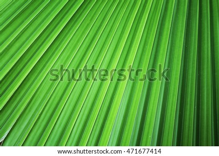 Palm leaves texture background.