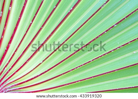 Palm leaves texture background,Blur:Close up,select focus with shallow depth of field:ideal use for background.  - stock photo