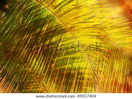 palm leaves - vintage stylized floral picture with patina texture - stock photo