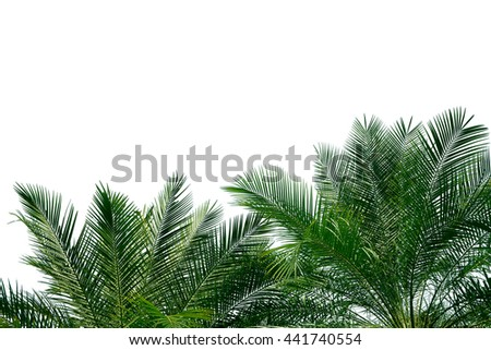 palm leaves with copy space on white background - stock photo