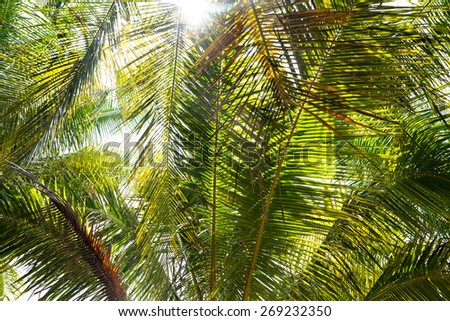 Palm leaves with sunlight, close up - stock photo