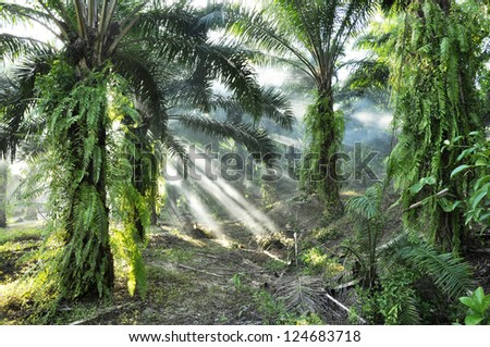 Palm Light Fog Day Outdoor Farm