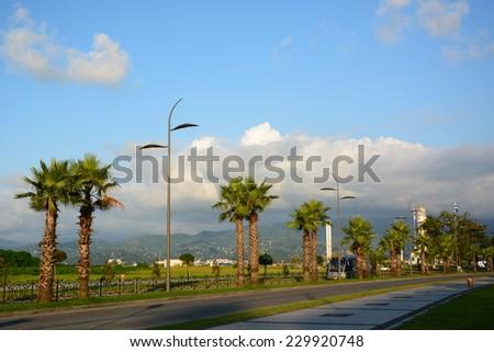 Palm-lined street in Batumi - stock photo