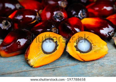 Palm oil, a well-balanced healthy edible oil is now an important energy source for mankind. It comes from the fruit itself. Today it is widely acknowledged as a versatile and nutritious vegetable oil. - stock photo