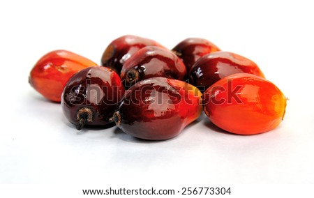 Palm Oil fruits isolated on white background, selective focus.  - stock photo