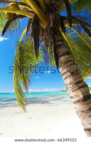 Palm on island Saona, caribbean sea