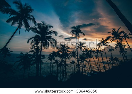 palm on the beach with beautiful sunset