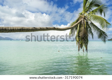Palm over the sea in the Seychelles - stock photo