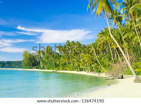 Palm Panorama Exotic Paradise - stock photo