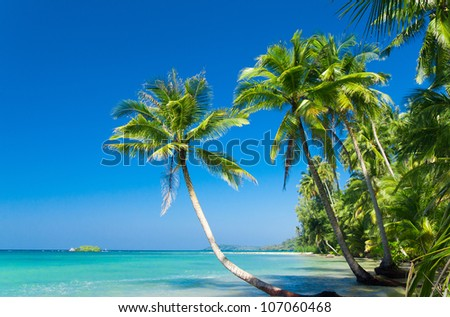 Palm Panorama Relaxation In Peace - stock photo