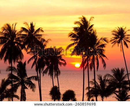 Palm Paradise Burning Skies  - stock photo