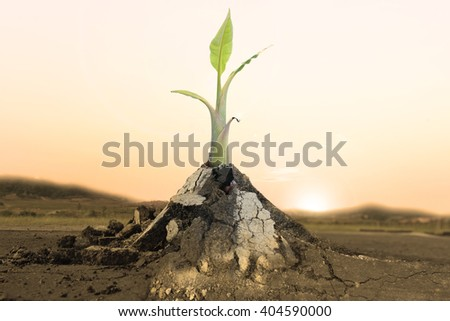 Palm plant tree banana growing through crack in pavement Ecology concept. Rising sprout on dry ground. - stock photo