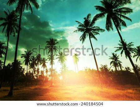 Palm plantation on tropical island - stock photo