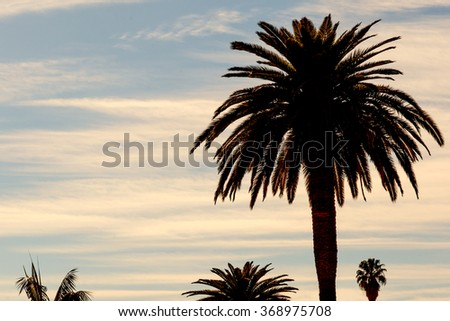 Palm silhouette on a colorful cloudy sky