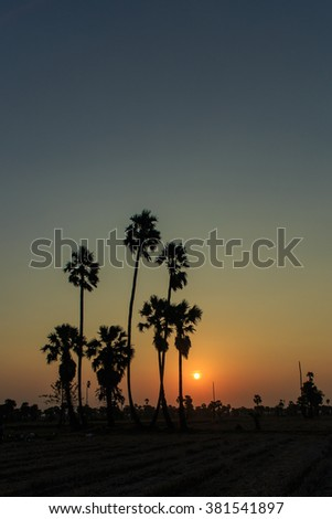 Palm silhouette,Palm silhouette in a field at dusk Thailand.