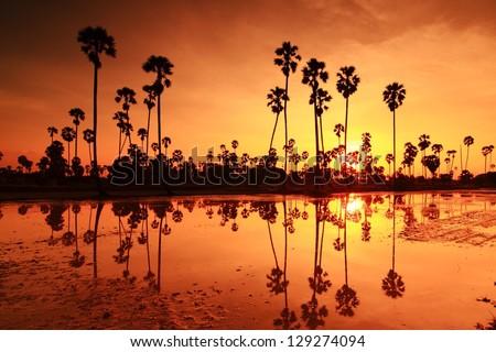Palm sunset water reflection. - stock photo
