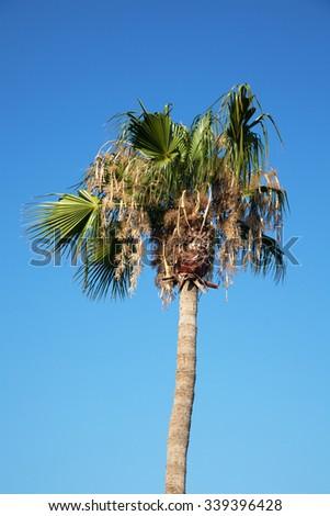 Palm tree against a blue sky - Limassol, Cyprus - stock photo