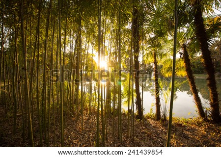 Palm Tree And Bamboo With Sun - stock photo