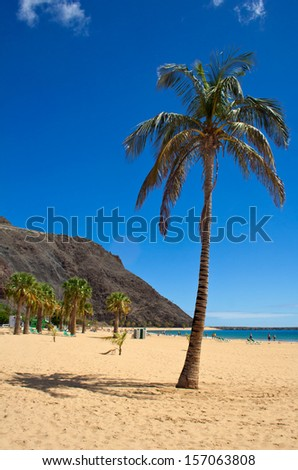 Palm tree and beach - stock photo