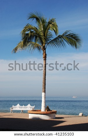 Palm Tree and Bench on the Bay, Downtown Puerto Vallarta, Mexico, - stock photo