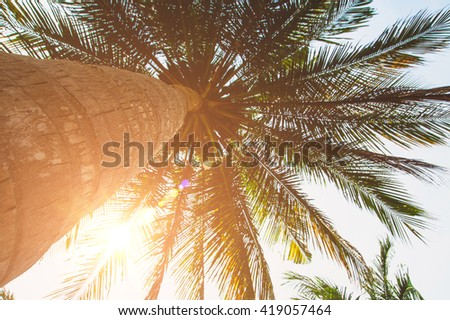 Palm tree and bright sun on blue sky background - stock photo