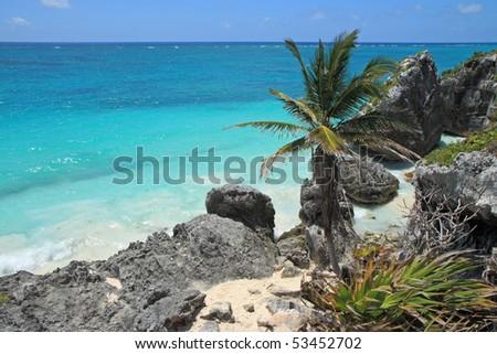 Palm tree and granite-studded tropical coast - stock photo