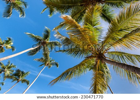 Palm tree and palm leaves from a different angle of view.  - stock photo