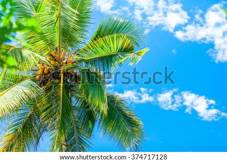 Palm tree and sky on background - stock photo