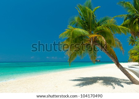 palm tree at a beautiful unspoilt beach - stock photo