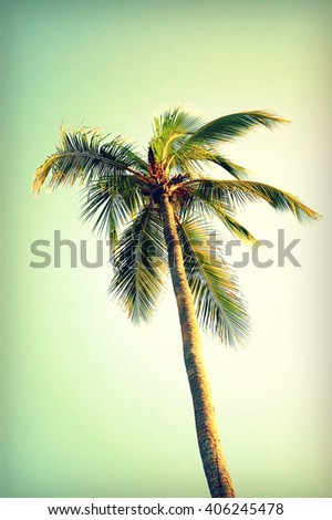 Palm tree at Santa Monica beach. Vintage post processed. Fashion, travel, summer, vacation and tropical beach concept. - stock photo
