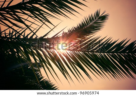 Palm tree at sunset - stock photo