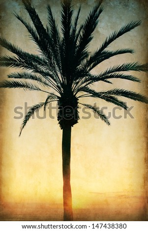 Palm tree at sunset on vintage background. - stock photo