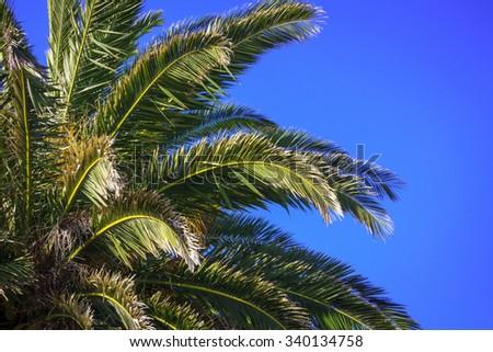 palm tree at the sky, location - New Zealand - stock photo