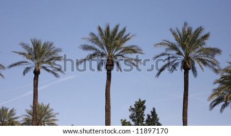 Palm Tree Backgrounds against a Blue Sky