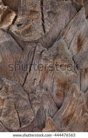 Palm tree bark Brown nexture