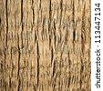 Palm tree bark texture - stock photo