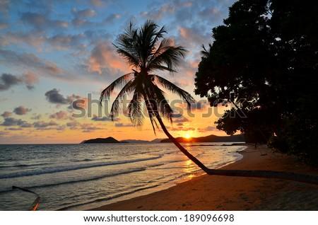 Palm Tree Beach at Sunset Background - stock photo